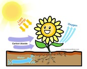 Plants+Photosynthesis forever!