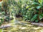 Tropisch regenwoud klimaat
