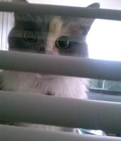SHE IS SO NOSEY SHE WONT COME HOME