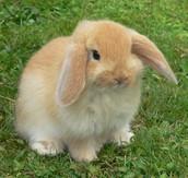 Sidney the Rabbit