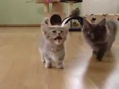 munchkin cats#2
