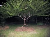 jardín àrbol