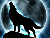 wolf in the team