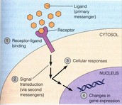 Cellular Communication Overview