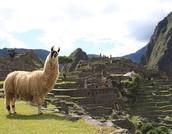 The Incas Civilization
