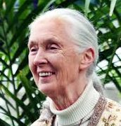 when was Jane Goodall born?
