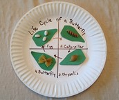 Create a Butterfly Life Cycle
