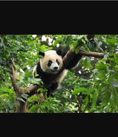 The habitat of the Giant Panda