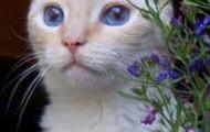 Cat                                   +