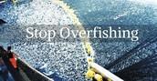 Over Fishing