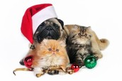 Presents for Pets - October 20th-November 3rd