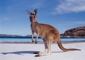 My Trip to Australia.