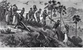 The African Slave Trade has Begun!