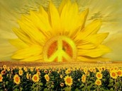 C-Hall Sunshine