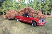 PINE STRAW VENDORS - MAY THE BUYER BEWARE