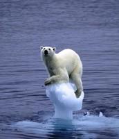 Polar Bears are Losing the Habitats!