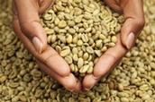 Έρευνες για το εκχύλισμα πράσινου καφέ