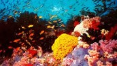 Heaps of coral!!!!!!!