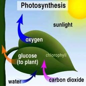 What are the final products of photosynthesis and how are they important to life on this planet?