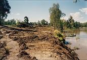 Vegetation Removal