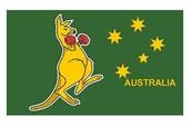 a boxing kangaroo