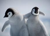 Penguin Website