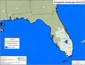 Where are the Everglades?