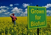 Advantages of Biofuel from Nature