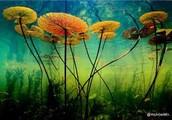 photosynthisis equation