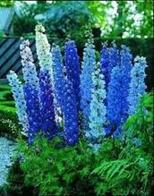 Spike Flowers