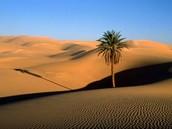 Egypt Landforms