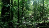 Green Tropical Trees
