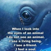 Animals need to be saved!