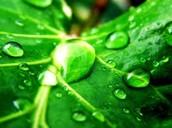 # green 3