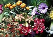 Image of the many different kinds of flower plants