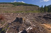 Example 3 of Deforestation