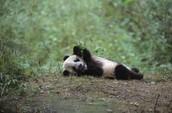 Pandas Being Lazy