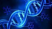 Genetic Cause