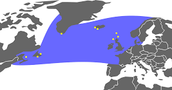 The Great Auk's Location