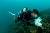 Basic Information About Marine Biology