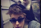 Bieber's Monkey is Quarantined