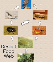 The food chain of the fairy armadillo