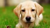 Elegy to my Dog Max