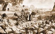 male Indentured Servants working