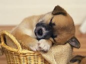"""""""If I have to be in a basket i might as well sleep."""""""