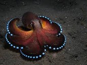 An Octopus at night
