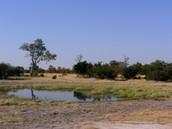 Landscape Of Botswana