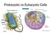 Prokaryotic vs. Eukaryote Cells