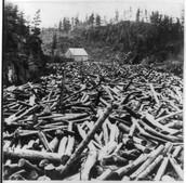MN Logging Industry