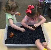 """SR:Anndi and Britt are harvesting """"carrots"""" in the black bean """"soil"""